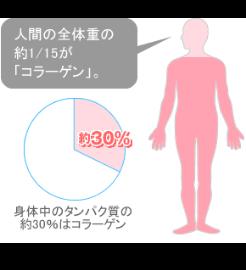 人間の全体重の約1/15が「コラーゲン」。